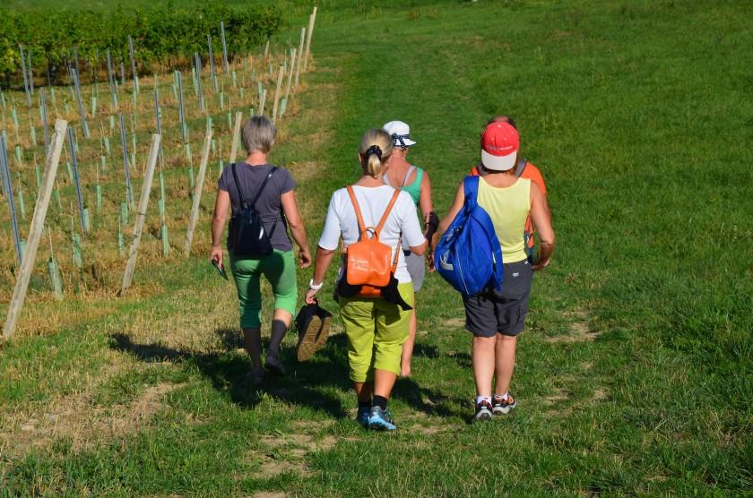 Wandern zwischen den Weinbergen - Sausaler Weinstraße